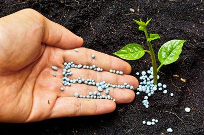 Fertilizanti si seminte